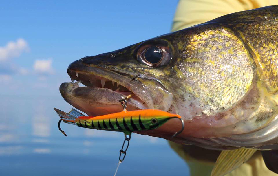 Shallow water leadcore trolling target walleye for Walleye fishing pole