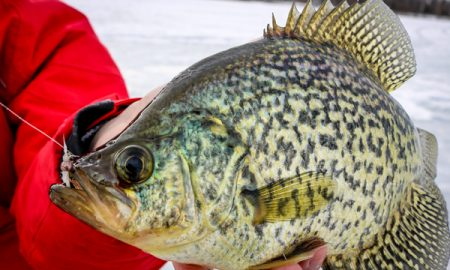 Tungsten ice fly target walleye for Crappie ice fishing