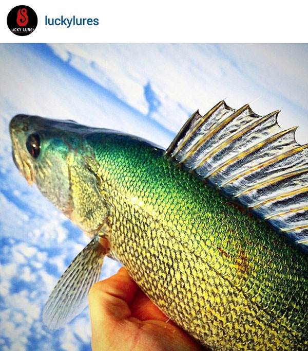 How green can greenbacks get, Odd ice catches, Storing ice ...