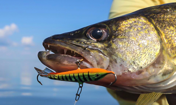 8 must-have hard-bodied jigging baits – Target Walleye